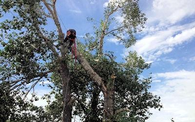 Broken Trees - Tree Removal