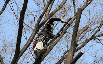 Professional Arborist Calgary AB